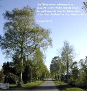 Birkenstraße Frühjahr